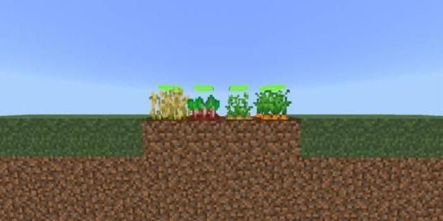 Как растут растения