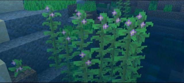 Как выглядят растения в воде